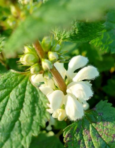 Fresh nettles and flowers - look how lovely they are.
