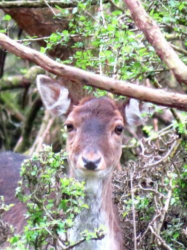 A Deer Head